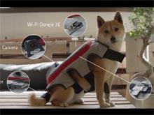 Pedigree научила собак публиковать фотографии в Facebook при помощи хвоста (ВИДЕО)