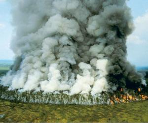 Тройной штраф за поджог поможет сберечь леса от пожаров