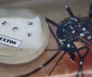 Вирусом Зика могут заразиться более двух миллиардов человек