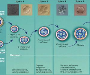 Ученым дали зеленый свет на редактирование человеческих эмбрионов