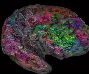 Составлена трехмерная карта слов в мозге человека