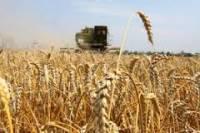Россия лидирует по экспорту пшеницы