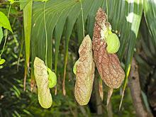 Лекарственные средства из растений могут быть опасны для здоровья